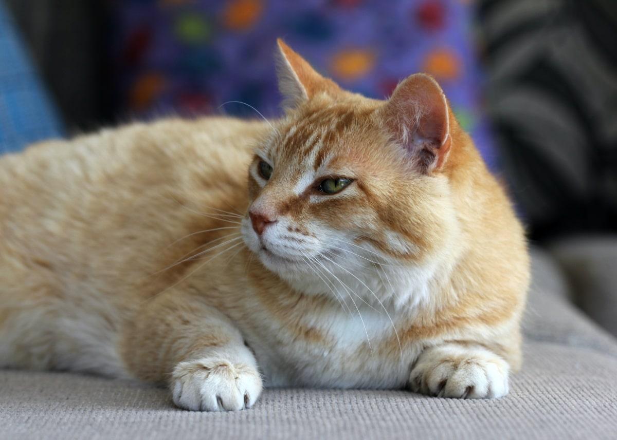 Gato en un sofá