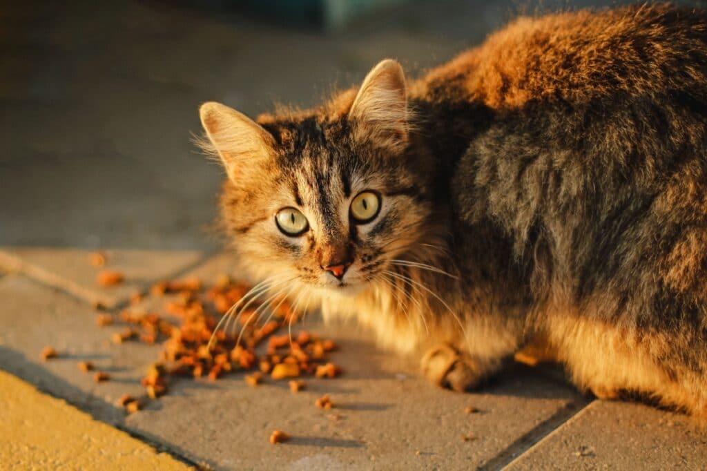 Gato comiendo del suelo