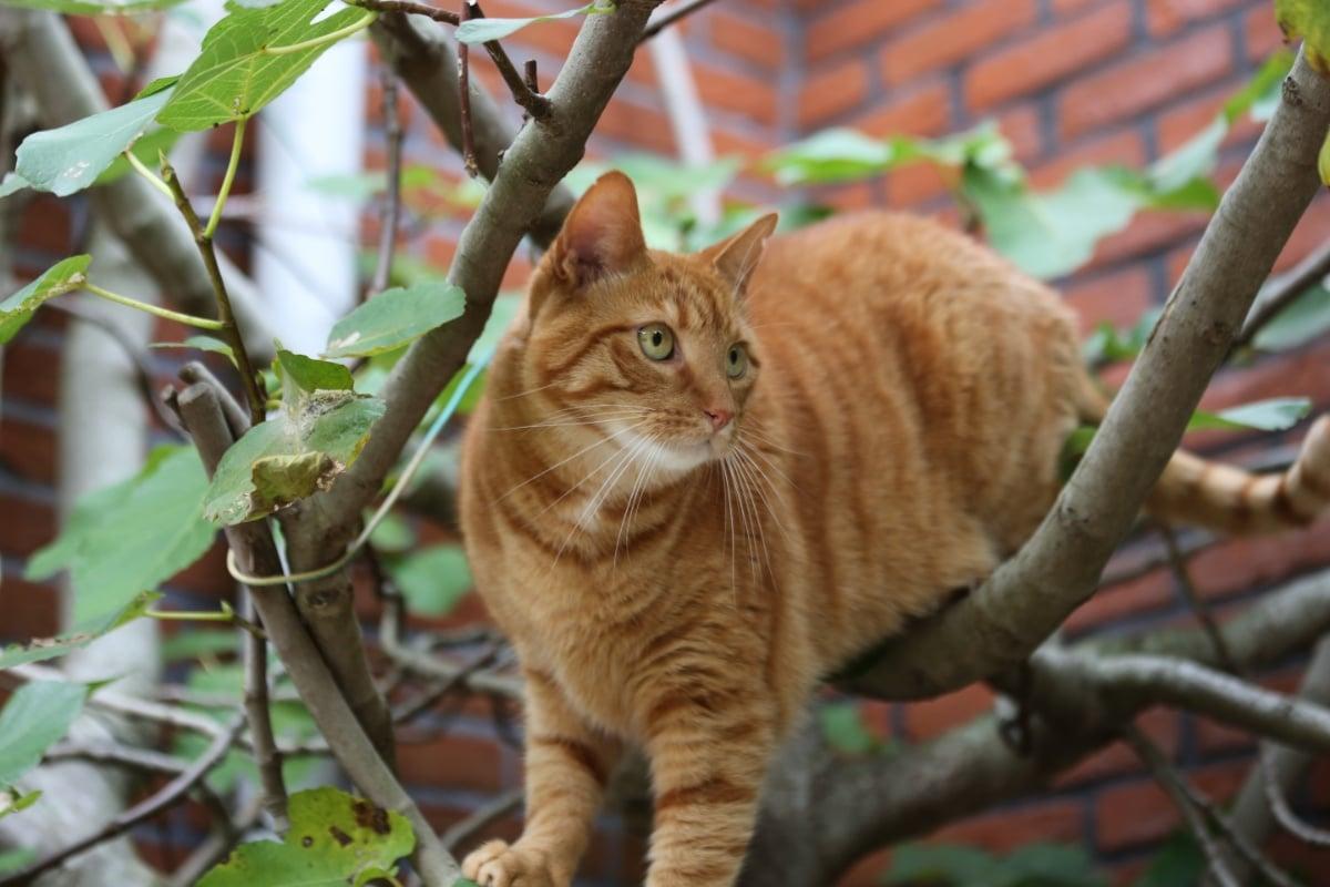 A los gatos les gusta ir al jardín, por eso a veces hay que ahuyentarlos
