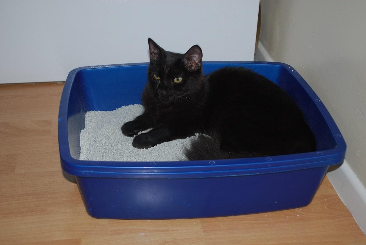 Un gato estirado en su arenero de bandeja