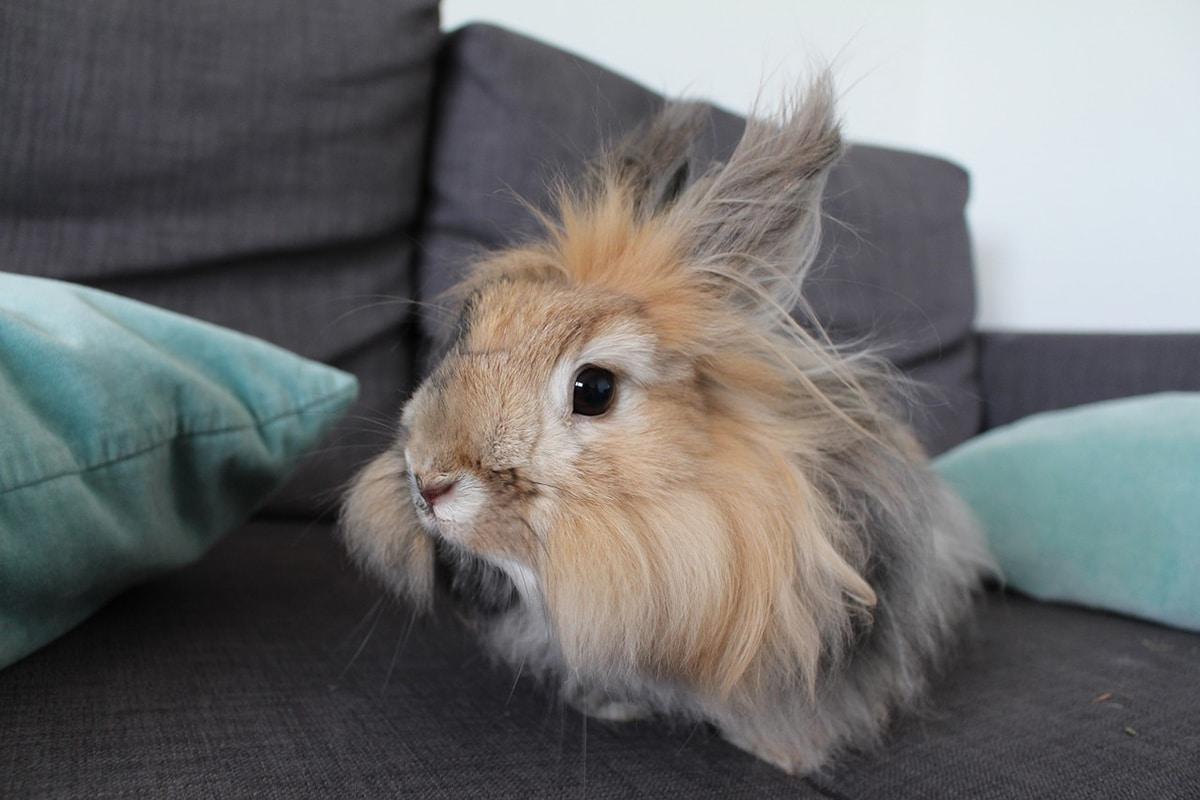 Los conejos domésticos necesitan una jaula que cumpla ciertos requisitos