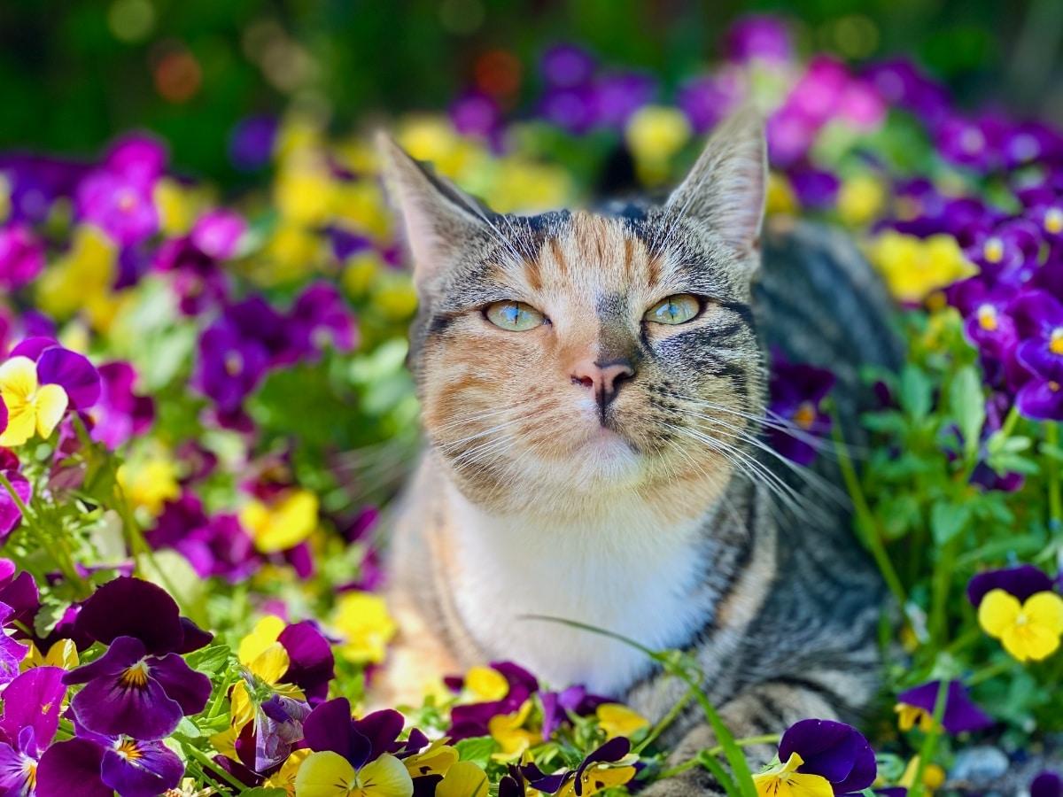 Los gatos pueden destrozar un jardín, pero son adorables