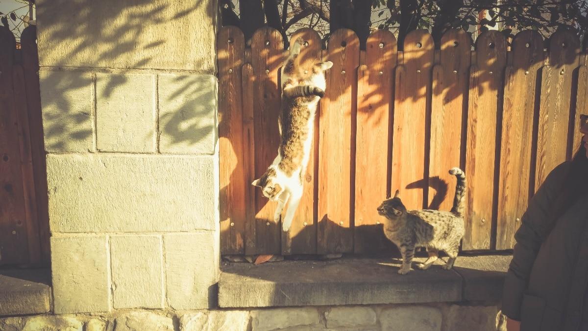Ahuyentar gatos es fácil con repelentes