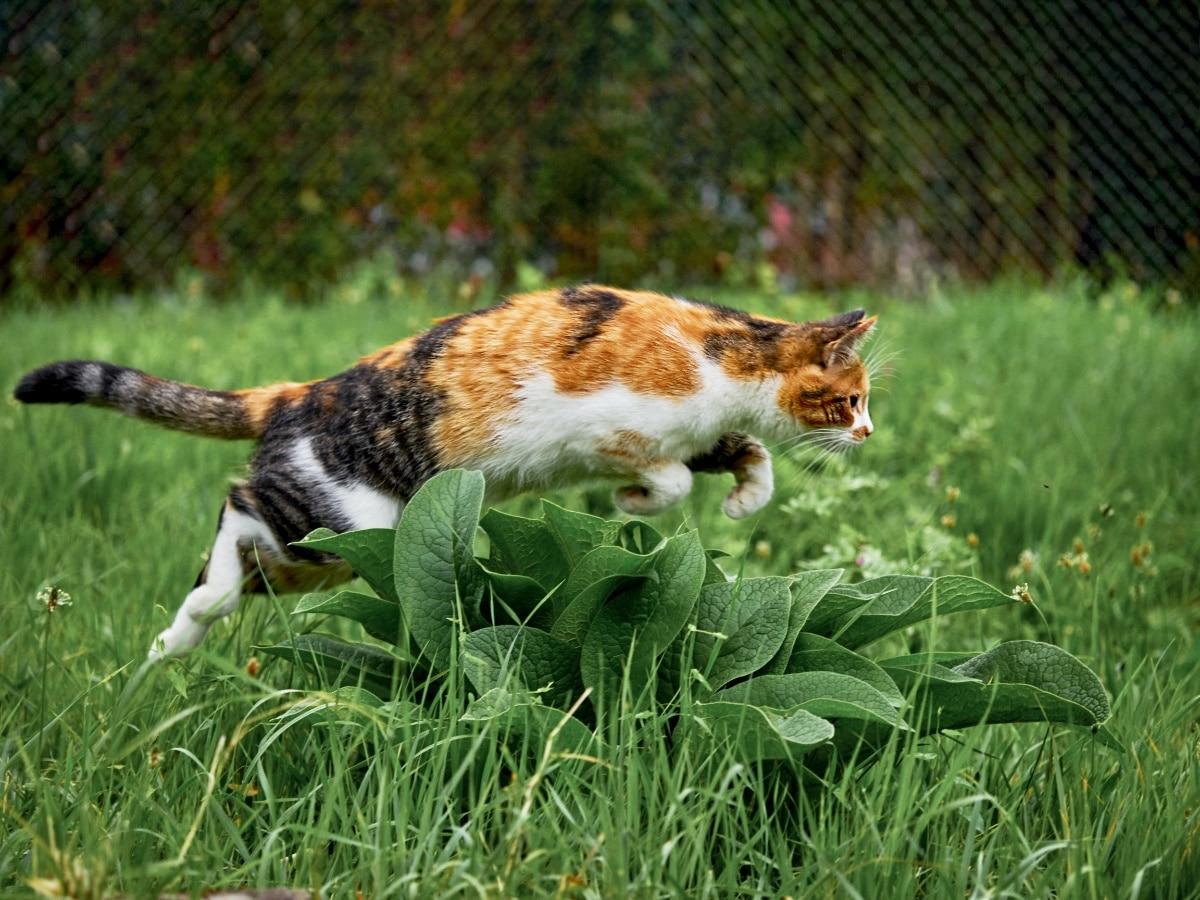 Los olores de ciertas plantas ahuyentan a los gatos