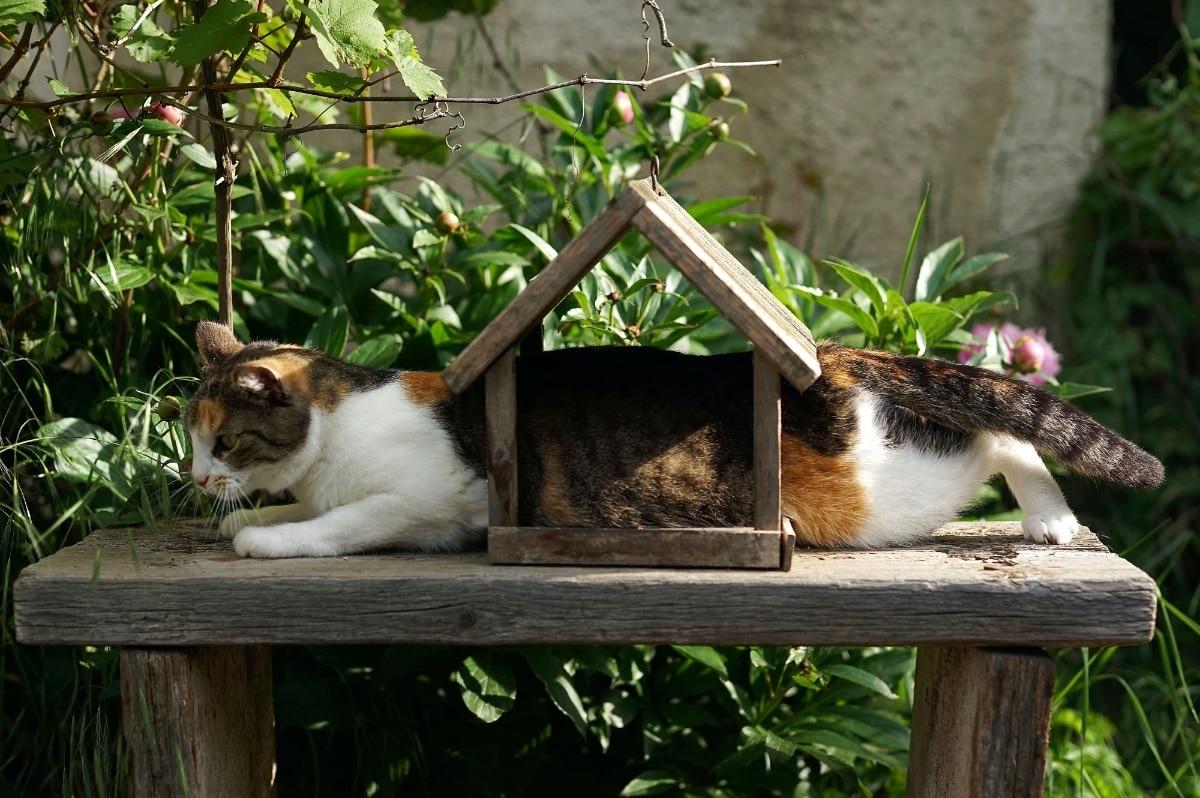 Los pájaros atraen a los gatos