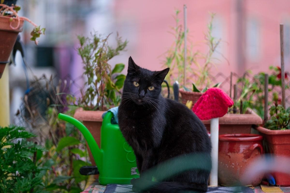 Existen métodos para ahuyentar gatos del jardín