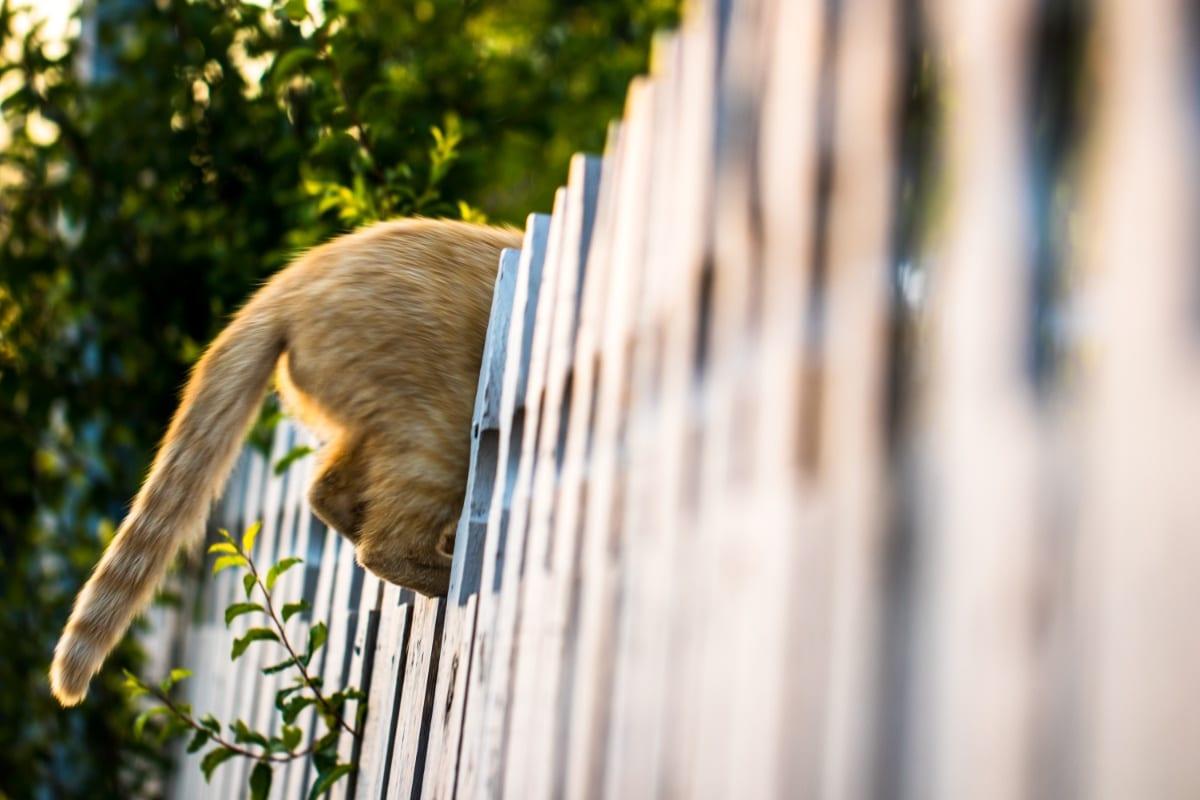 Las vallas no siempre ahuyentan a los gatos