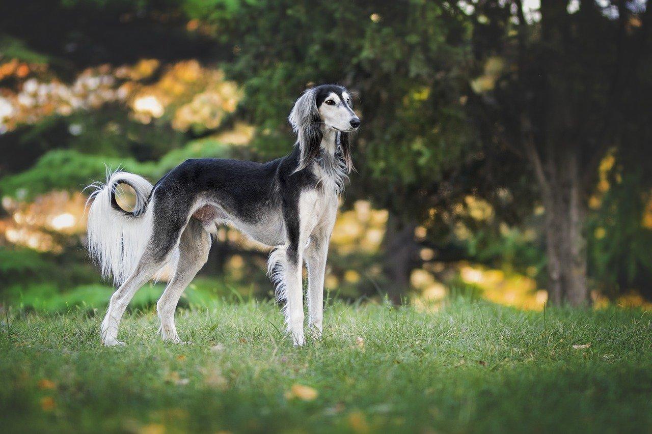 Los perros se originaron en Eurasia