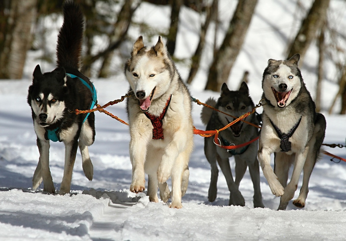 Las razas de perros surgieron dependiendo de su funciones