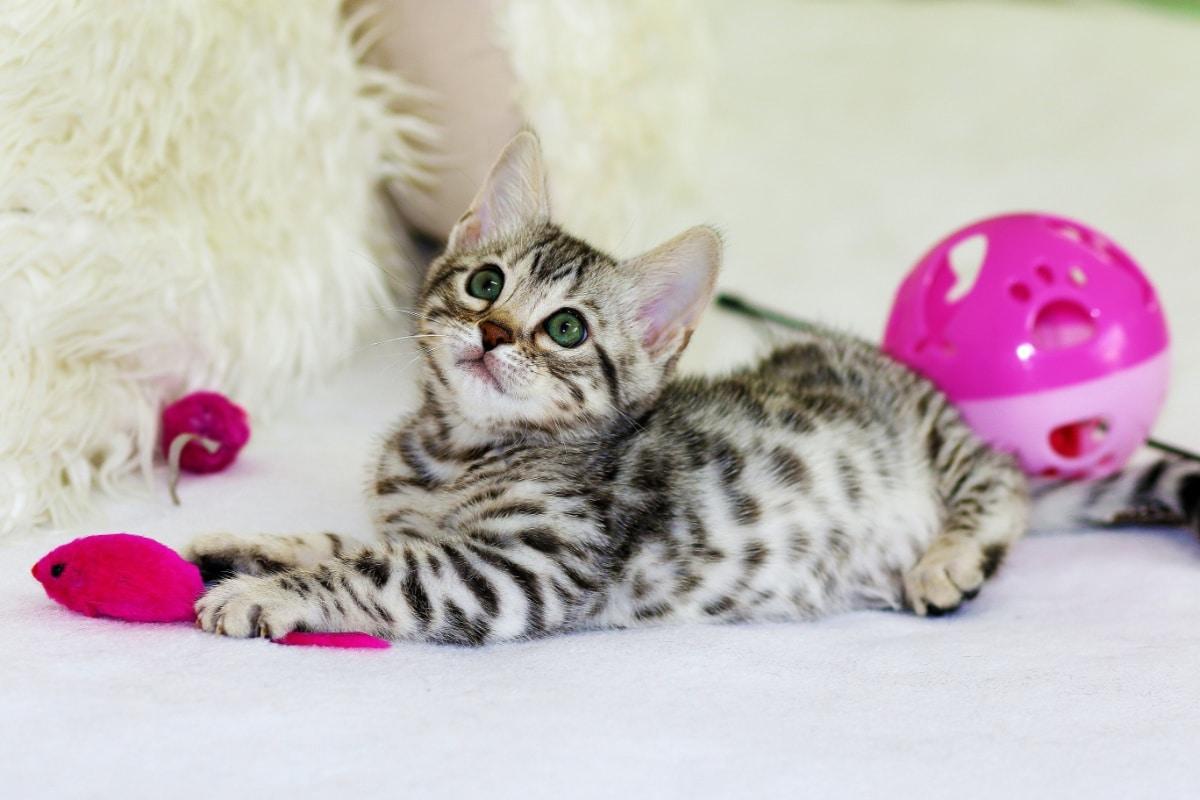 Los ratones son uno de los juguetes más apreciados por los felinos