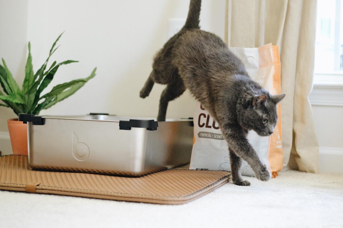 El estreñimiento en gatos puede ocasionar que vayan menos al baño
