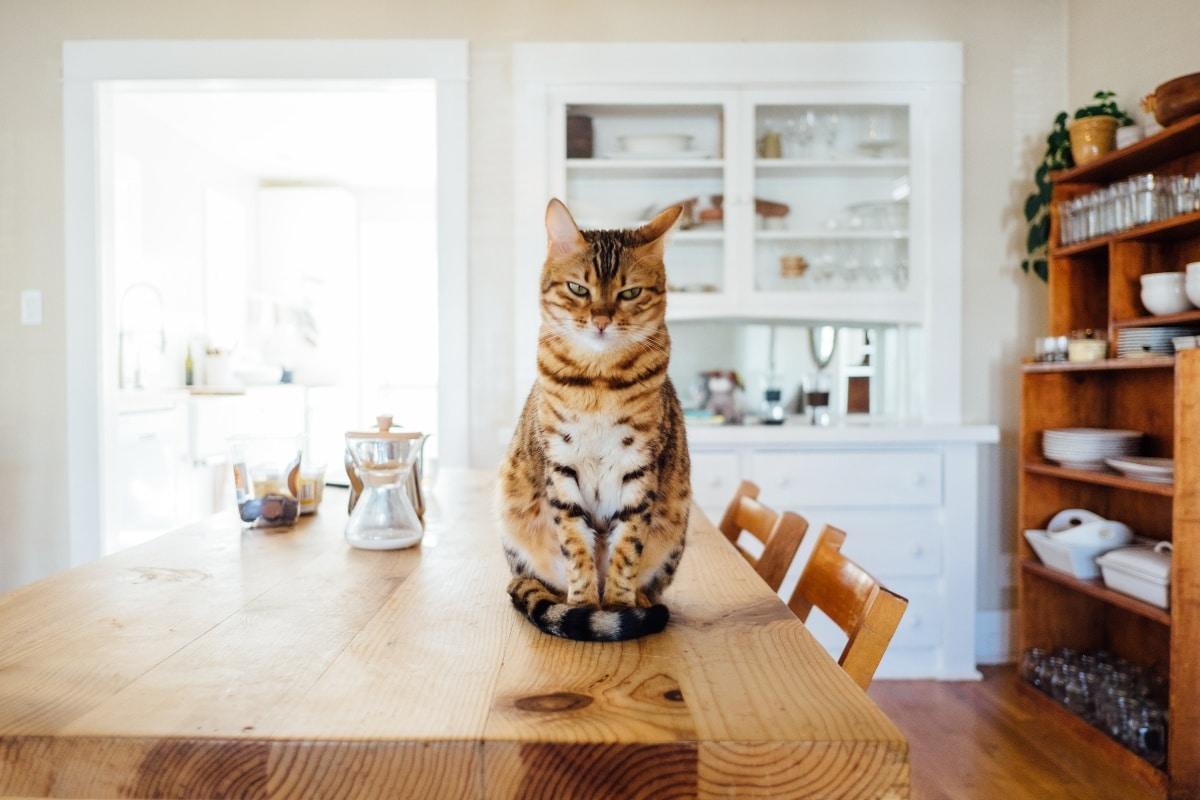 Los gatos estreñidos pierden las ganas de comer y están letárgicos