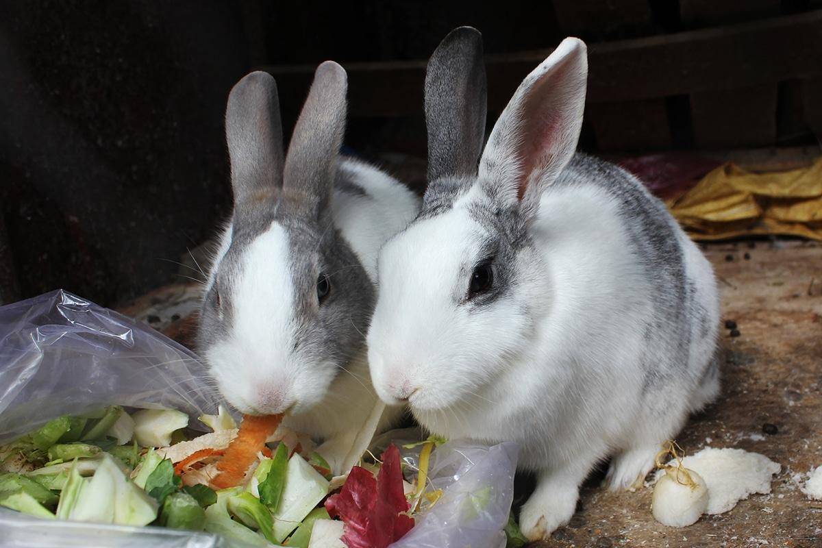Cada raza de conejo tiene su propio carácter
