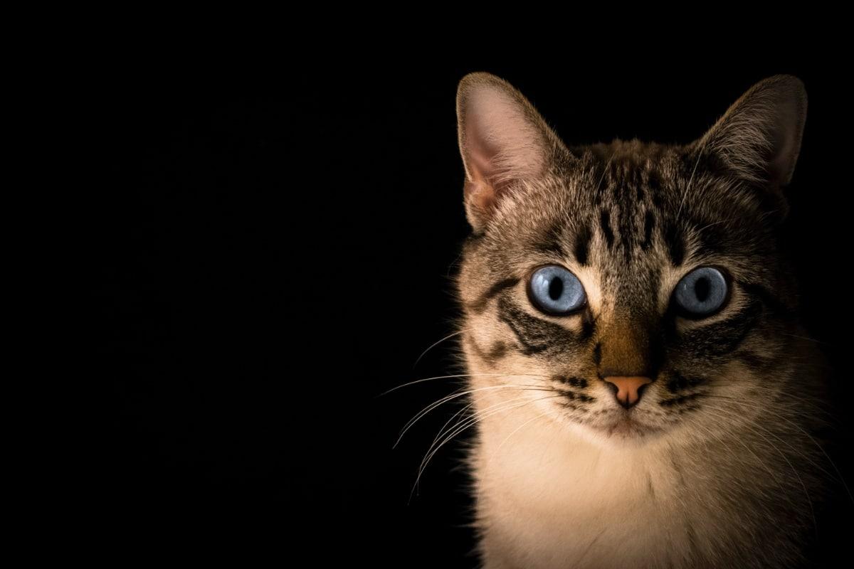 Un gato mirando fijamente a cámara